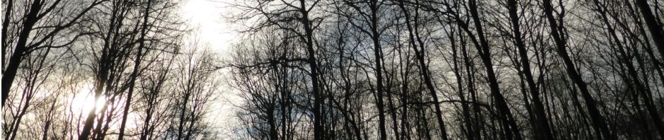 Kahle Bäume im Wald