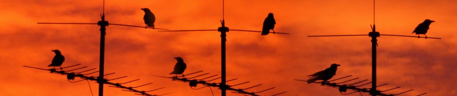 Seltsame Vögel auf Antenne bei Abendrot